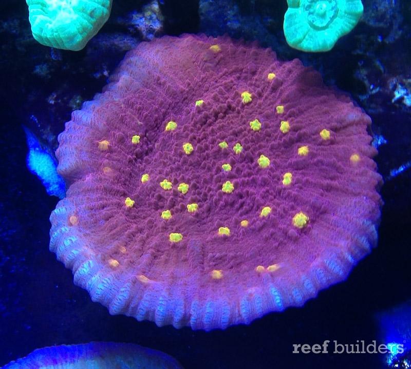 ovision-aquarium-coral-pictures-4