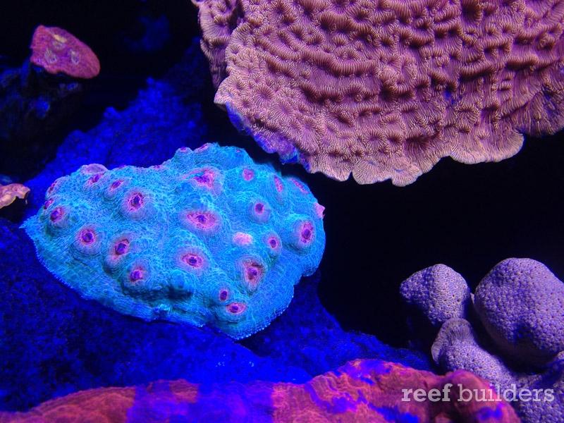 ovision-aquarium-coral-pictures-7