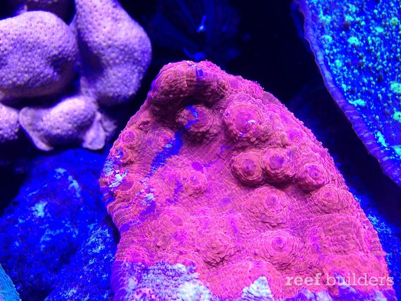 ovision-aquarium-coral-pictures-9