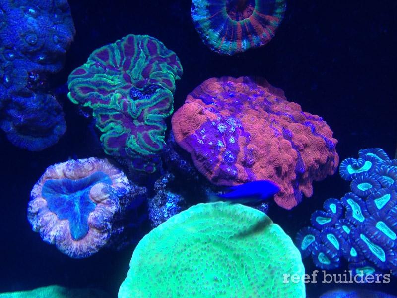ovision-aquarium-coral-pictures