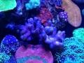 ovision-aquarium-coral-pictures-3