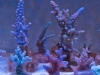 panorama-pro-corals-2