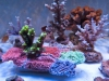 panorama-pro-corals-3