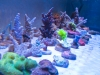 panorama-pro-corals-4