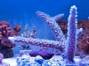 panorama-pro-corals-5