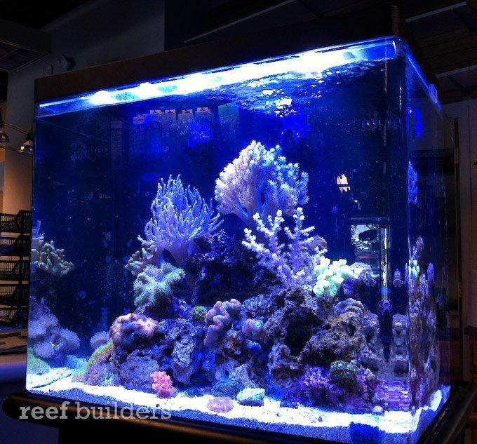 Nuvo 38 Gallon Aquarium