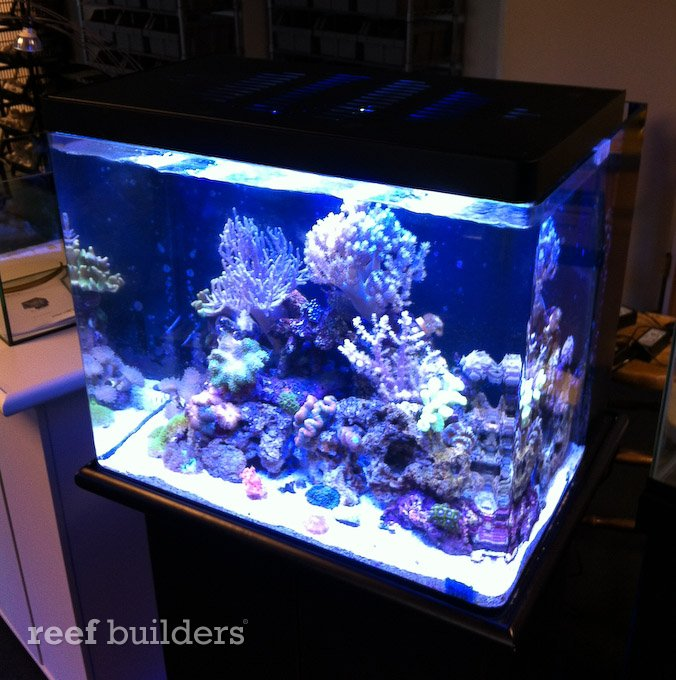 Panorama pro led and mini 38 nuvo aquarium are a near for 38 gallon fish tank