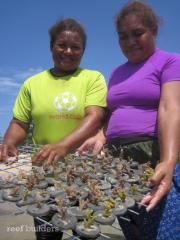 PNG SEASMART coral mariculture program 2