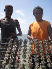 PNG SEASMART coral mariculture program 3