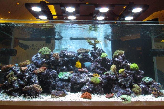 coral under uv light