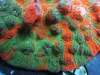 meltdown-chalice-coral-2