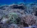 raja-ampat-live-stony-coral-reef-1