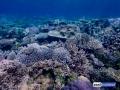 raja-ampat-live-stony-coral-reef-2