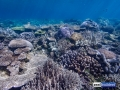 raja-ampat-live-stony-coral-reef-3