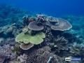 raja-ampat-live-stony-coral-reef-4