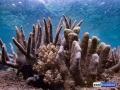 raja-ampat-live-stony-coral-reef-6