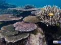 raja-ampat-live-stony-coral-reef-7