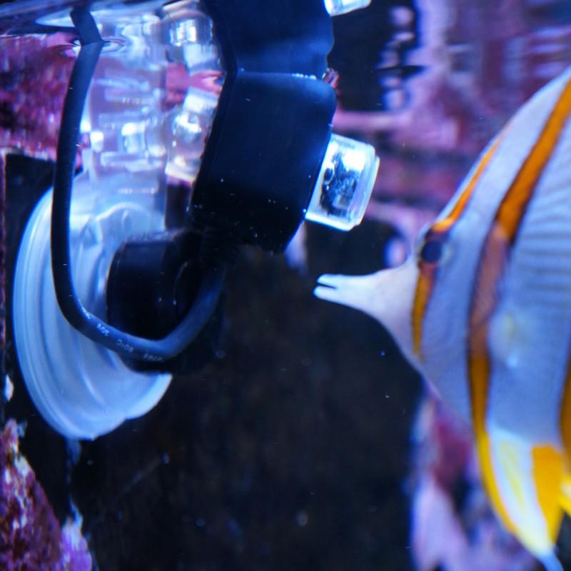 ic_reefcam_underwater