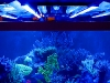 reefbrite-actinic-led-striplights-670-2