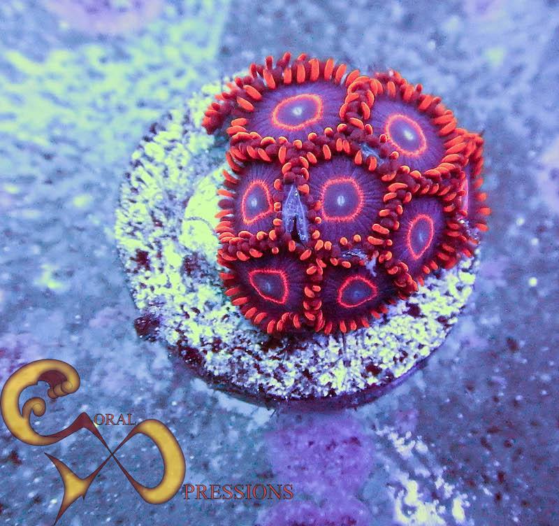 Coral-Xpressions-3