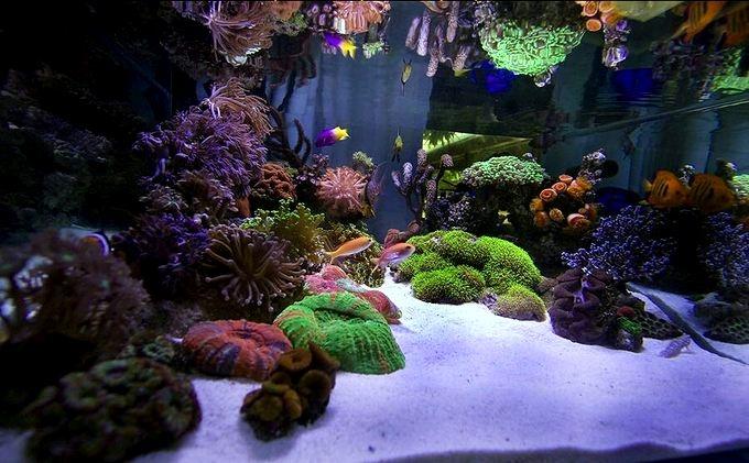 siam-reef