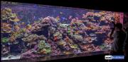 sea-aquarium-sentosa-reef-tank-1.jpg