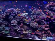 sea-aquarium-sentosa-reef-tank-10.jpg