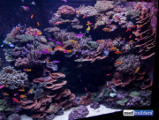 sea-aquarium-sentosa-reef-tank-11.jpg