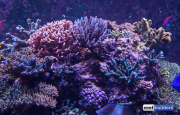 sea-aquarium-sentosa-reef-tank-2.jpg