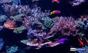 sea-aquarium-sentosa-reef-tank-3.jpg