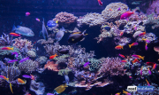 sea-aquarium-sentosa-reef-tank-4.jpg