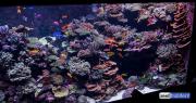 sea-aquarium-sentosa-reef-tank-5.jpg