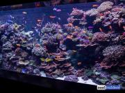 sea-aquarium-sentosa-reef-tank-6.jpg