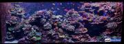 sea-aquarium-sentosa-reef-tank-7.jpg