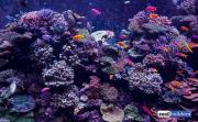 sea-aquarium-sentosa-reef-tank-8.jpg