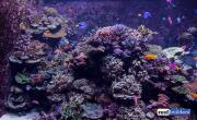 sea-aquarium-sentosa-reef-tank-9.jpg