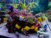 seabox-reef-aquarium-1