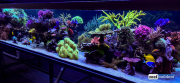 seabox-reef-aquarium-12