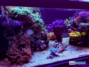 seabox-reef-aquarium-2