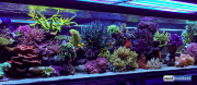 seabox-reef-aquarium-3