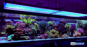 seabox-reef-aquarium-4