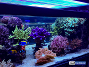 seabox-reef-aquarium-7
