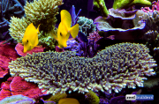 seabox-reef-aquarium-9