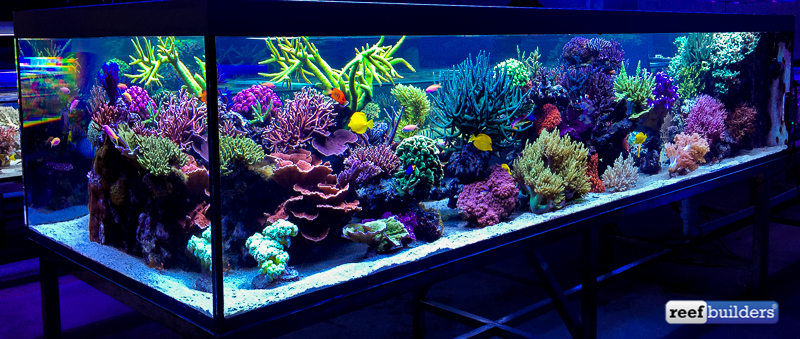 The supernatural reef tank of Seabox Aquarium - Reef ... 10 Gallon Home Aquariums