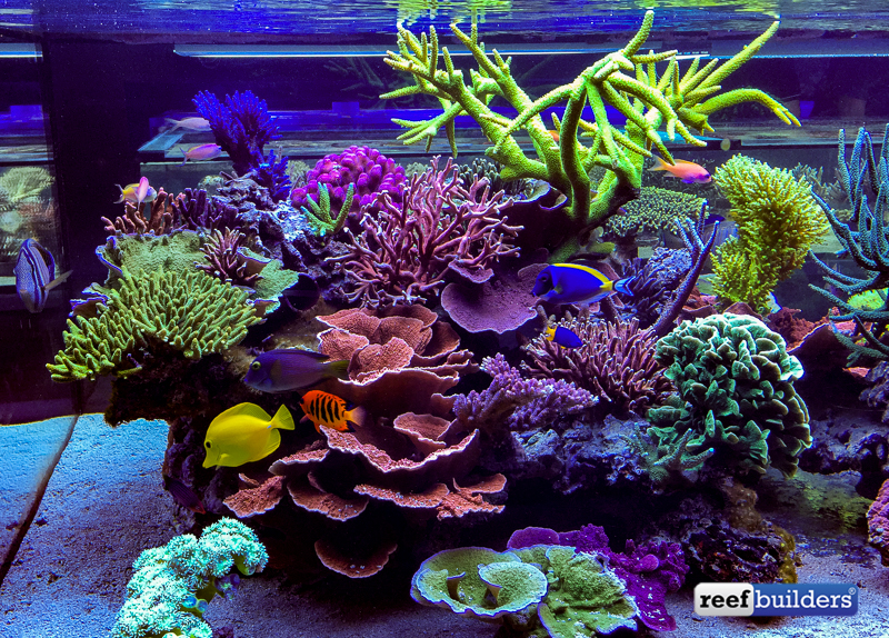 how to get nitrates down in saltwater tank