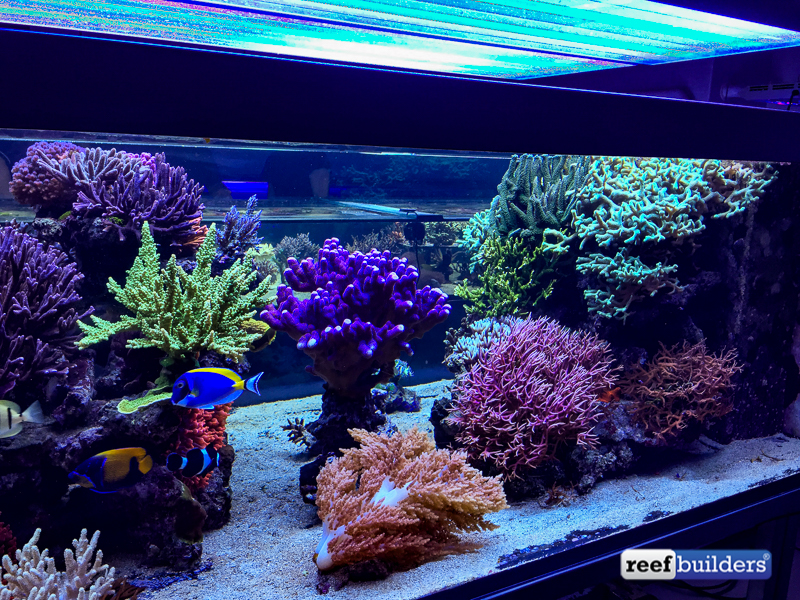 The Supernatural Reef Tank Of Seabox Aquarium  Reef. Buelow Miller Real Estate. Az Tile Tempe. Living Room Table Decor. Contemporary Curio Cabinets. Heart Artwork. Lowes Bathrooms. Contemporary Bathroom Vanities. Floating Wood Shelves