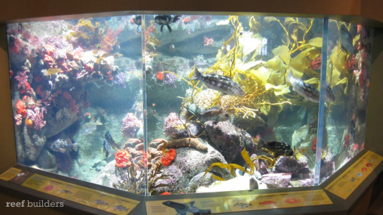 seashine-lifi-monterey-bay-aquarium