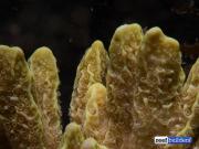 Bali Aquarium Coral Farm
