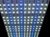 sfiligio genesis LED module white and blue