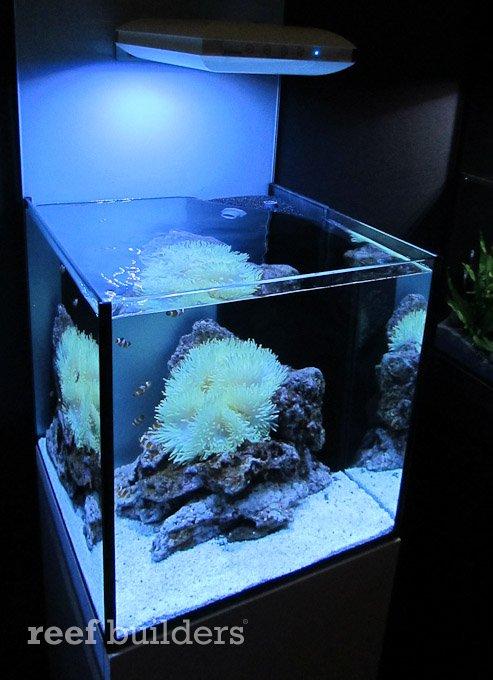 Giesemann Teszla Hands On Is A Piece Of Led Art Reef